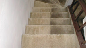 carpet cleaning North shore